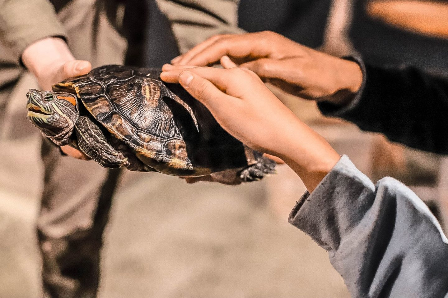 a turtle being pet