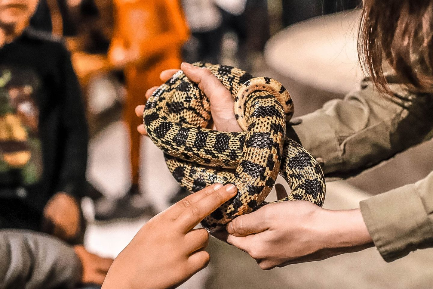 a snake being touched